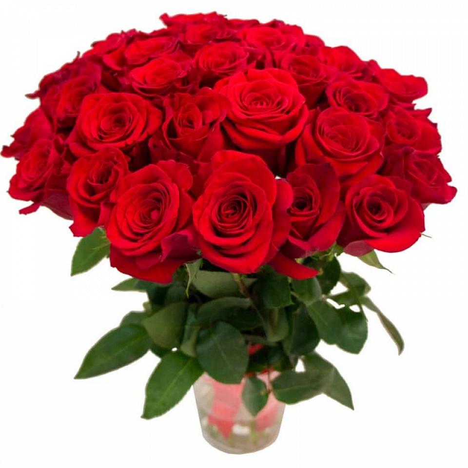 Картинки цветов роза красивые, смешные